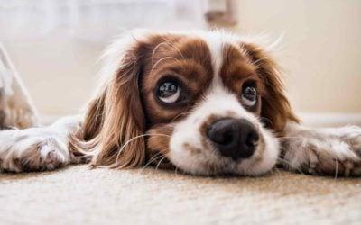 Alles Wichtige zum Fliegen mit Hund – hierauf müssen Sie beim Thema Hund im Flugzeug achten